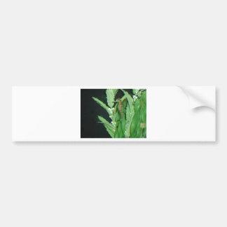 sea horse with plants bumper sticker