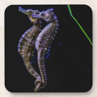 Sea Horses (Seahorses) Beverage Coaster