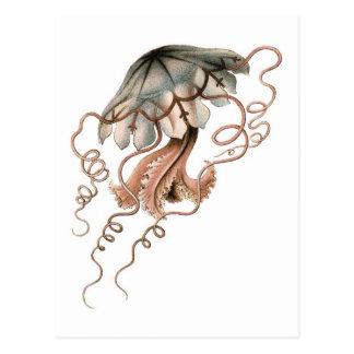 Sea Jelly Postcard