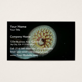 Sea Lamprey Business Card