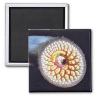 Sea Lamprey Magnet
