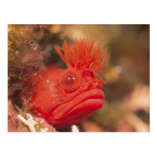 Sea Life - Fish Postcard