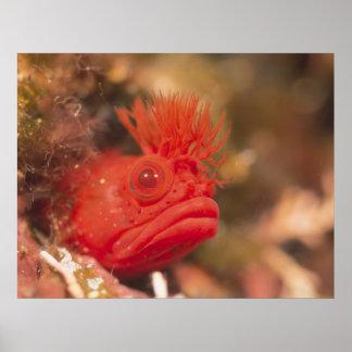 Sea Life - Fish Poster