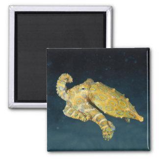 Sea Life - Octopus Magnet