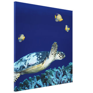 Sea Life Sea Turtle Canvas Print