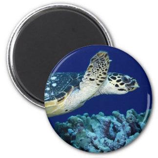Sea Life - Sea Turtle Magnet