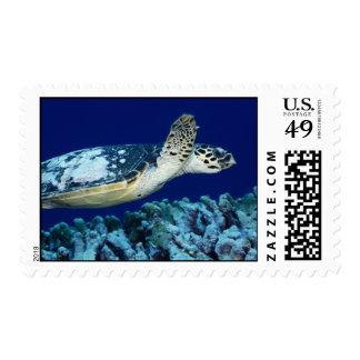 Sea Life - Sea Turtle Postage