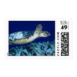 Sea Life - Sea Turtle Postage Stamps