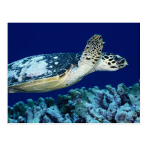 Sea Life - Sea Turtle Postcard