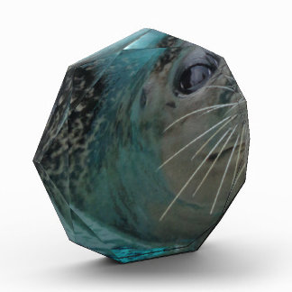 Sea Life, Sweet Swimming Seal Award