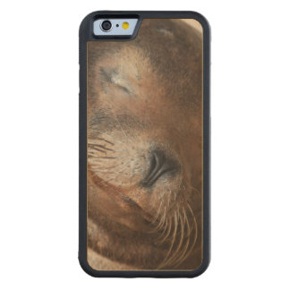 sea-lion-113.jpg carved® maple iPhone 6 bumper