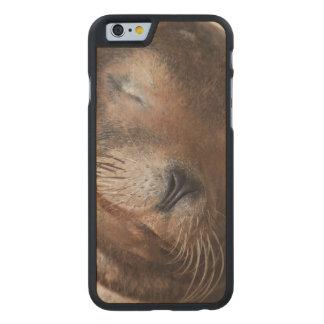 sea-lion-113.jpg funda de iPhone 6 carved® de arce