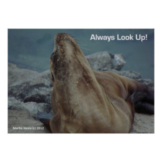 Sea Lion - Always Look Up! - Poster