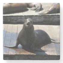 Sea Lion at Pier 39 in San Francisco Stone Coaster
