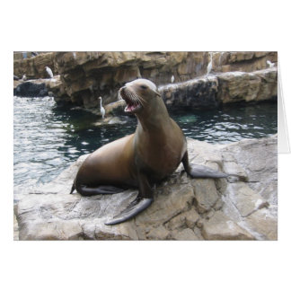 sea lion barking greeting cards