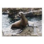 sea lion barking greeting card