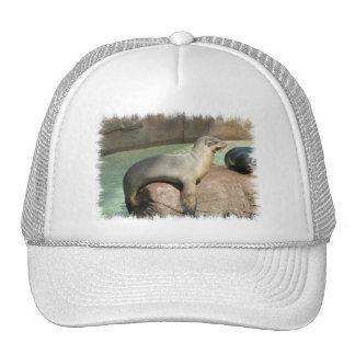 Sea Lion Baseball Hat