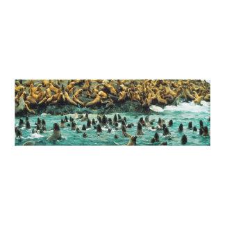 Sea Lion Beach Party Canvas Print