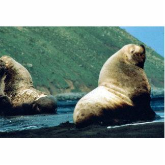 Sea Lion Bull Cut Out