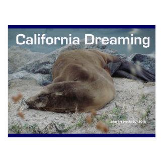 Sea Lion - California Dreaming - Postcard