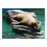 Sea Lion Card