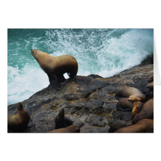 Sea Lion Card