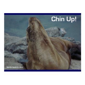 Sea Lion - Chin Up! - Postcard