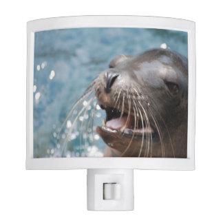 Sea Lion Night Lights