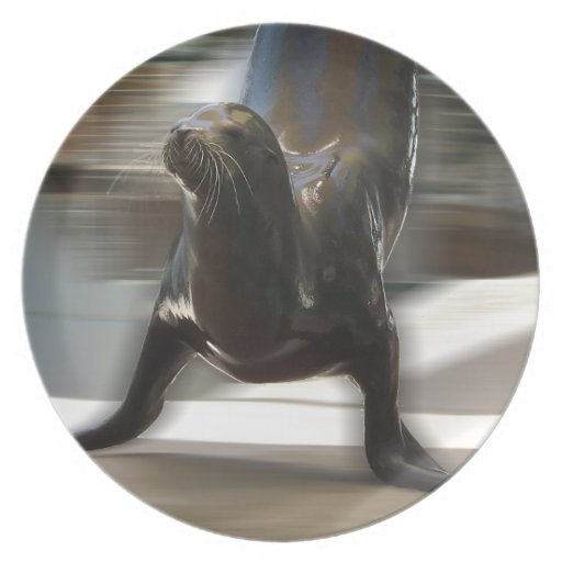 Sea Lion Doing Trick at Kansas City Zoo Dinner Plate