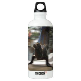 Sea Lion Doing Trick at Kansas City Zoo Water Bottle