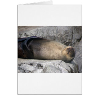 Sea Lion Dreaming Card