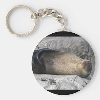 Sea Lion Dreaming Keychain