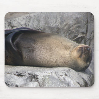 Sea Lion Dreaming Mouse Pad