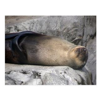 Sea Lion Dreaming Postcard