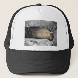 Sea Lion Dreaming Trucker Hat