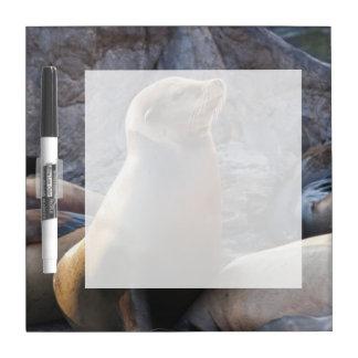 Sea Lion Dry-Erase Board