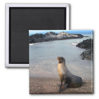 Sea Lion Galapagos Island 2 Inch Square Magnet