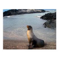 Sea Lion Galapagos Island Postcard