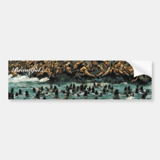 Sea Lion Group at Haulout Car Bumper Sticker