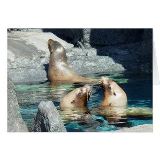 Sea Lion Hangout Card