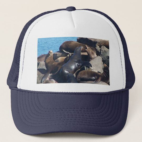 Sea Lion Hat