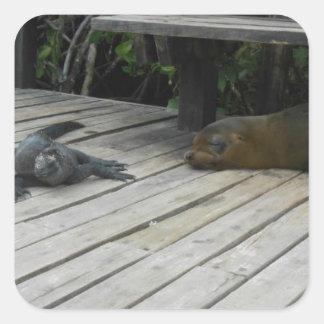 Sea Lion & Iguana in Galapagos STICKER