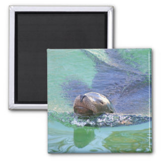 Sea Lion; In the Swim of Things! Refrigerator Magnets