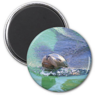 Sea Lion; In the Swim of Things! Fridge Magnets
