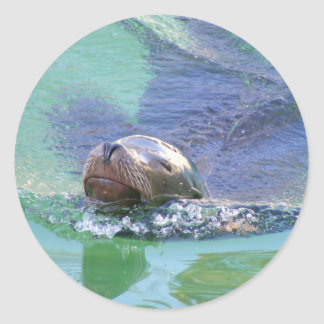 Sea Lion; In the Swim of Things! Round Sticker