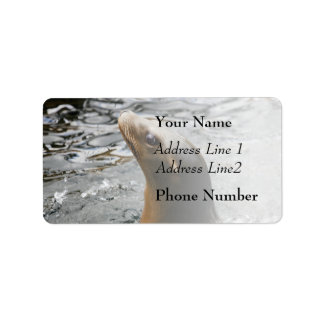Sea Lion In The Water - Animal Photography Address Label