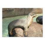 "Sea Lion Invitation 5"" X 7"" Invitation Card"