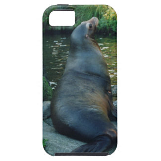 sea lion iPhone 5 case