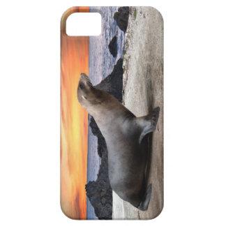 Sea Lion iPhone SE/5/5s Case