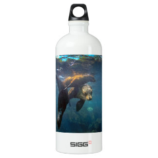 Sea lion mother and pups underwater Galapagos Water Bottle